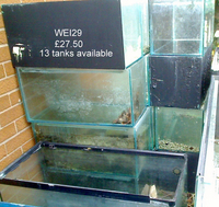 MAY SALE - WEISNICK AQUARIUMS ACCESSORIES BONANAZA - Over 200 pre-owned ORNAMENTS + Bogwood, Air pumps, Plants etc plus loads of other stuff. From �upwards. Viewings welcome Manchester M45