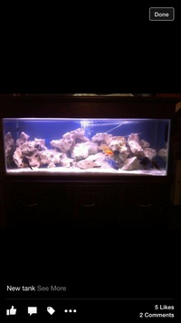 4ft tank and cabinet