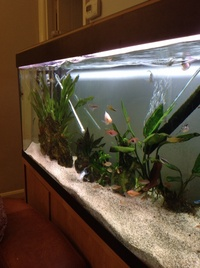 Hove, East Sussex. FREE -variety of tropical fish