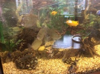 Fully setup juwel vision for sale with fish �0 Ono