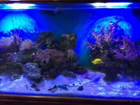 6ft marine aquarium