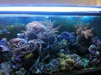 300 litre marine tank with live rock, corals, fish, skimmer and ligthts