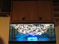 Fish tank and cabinet set up