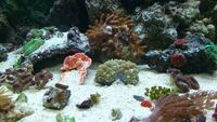 Large Selection of Marine fish and corals for sale Rainham Kent