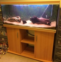 Rena 4 Foot Tank - Full Set up reduced