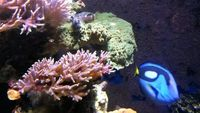Marine aquarium 6x2x2 full set up �50