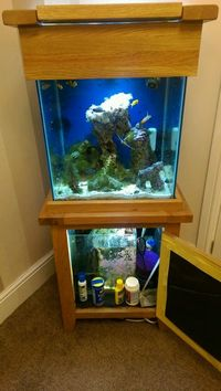 Live corals, Live rock, Marine fish in Solid oak fish tank and cabinet