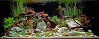 VARIOUS TROPICAL FISH FOR SALE