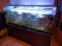Help Needed for Disposal of 6ft Tank - Various Sizes of Fish Tanks and Accessories
