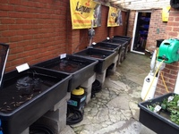 POND SPECIALISTS WITH FANTASTIC STOCKS OF QUALITY GOLDFISH. KOI,STURGEON AND OTHER POND FISH.