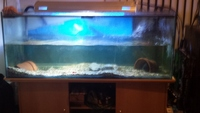 MAY SWAP FOR DECENT 3FT FULL SET UP 5 x 2 x 2 FISH TANK AND STAND & 3ft Halide - DRAINED CLEANED - �0 ono for all