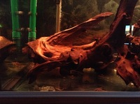 Rena Aqualife 500L 5ft X 2ft with L Number Plecs for sale