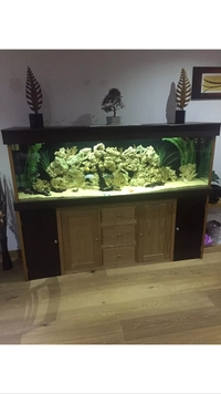 Fish Tank 6ft Including Everything