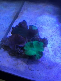 Live roock, soft corals, marine fish, in Marine Tank Sale