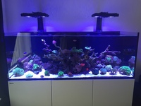 Live corals, marine fish, live rock in fully stocked Red Sea reefer 450