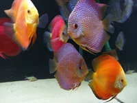 Discus For Sale Scotland