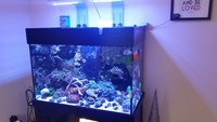 Black AquaReef 300 marine tank for sale including all equipment, fish & coral.