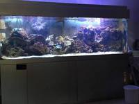 For sale - Marine tank, fish, live rock, etc 7.6 x 2 x 2.6