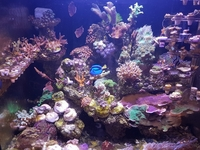 SPS frags and Zoas - Bargain Prices: Brighton.