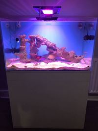 Marine tank setup full equipped with fish etc. �0