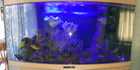 MAY SALE - WEISNICK AQUARIUMS SALE Great chance to get a bargain. Over 60 pre-owned, tanks plus loads of accessories. From �upwards. Viewings welcome Manchester M45