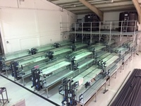 Tropical Fish International - Newly set up UK Wholesaler