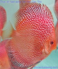 Martin Ng Discus available at Corban Discus