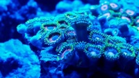 LONDON UK Shipping Marine Corals Anemone Starfish & more for SALE