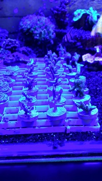Coral frags bargain