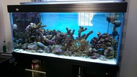 Full marine tank set up for sale
