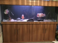 6 ft fish tank and cichlids