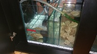 AQUARIUM BLACK 4FT X 3FT HIGH X 18INCH WIDE WITH 42 INCH SUMP AND PLUMBING OPTI WHITE 12MM 480.00 ONO
