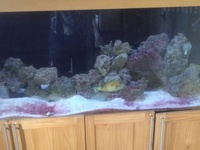 Need gone ASAP- marine livestock