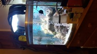 Live rock, SPS Corals, Inverts, Clam, in River reef 94 reduced �