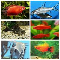 MIXED TROPICAL FISH BUNDLE TO SELL X 10 FISH ONLY �.00