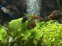 Discus x4 for sale