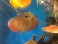 Im selling my discus