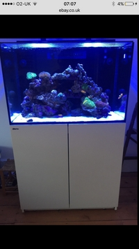 Red Sea max E260, white cabinet with reefloat AWC 31