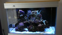Hard and Soft corals, Marine fish, in Complete marine setup