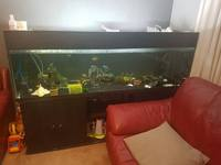 6x2x2 fish tank for sale �0
