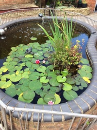 Garden Pond Equipment, Fish and Plants. Pump, UV Filter, Tanks, Filter everything must go.