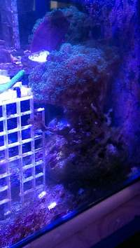 Selection of SPS Frags for Sale...