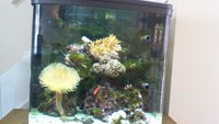 Live Corals, critters and fish in Marine tank