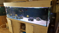 Aquarium 6x2x2 with cabinet for sale.