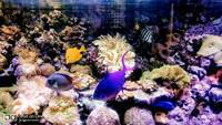 Live rock, Marine fish, in matured 1000L aquarium with all inclusive for sale .