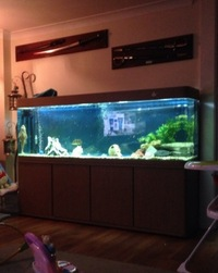 6ft tank, stand and external filter for sale