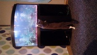 190l fluval corner tank with everything plus fish �0