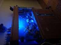 Full set up Marine reef system with sump andall livestock 5ft
