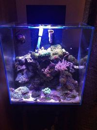 Modified Fluval Edge 46 Litre Marine Fish Tank with a Ultrabrite light system, Fluval Edge Black Stand, equipment and livestock