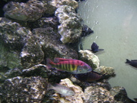 Malawi cichlids and equipment for sale